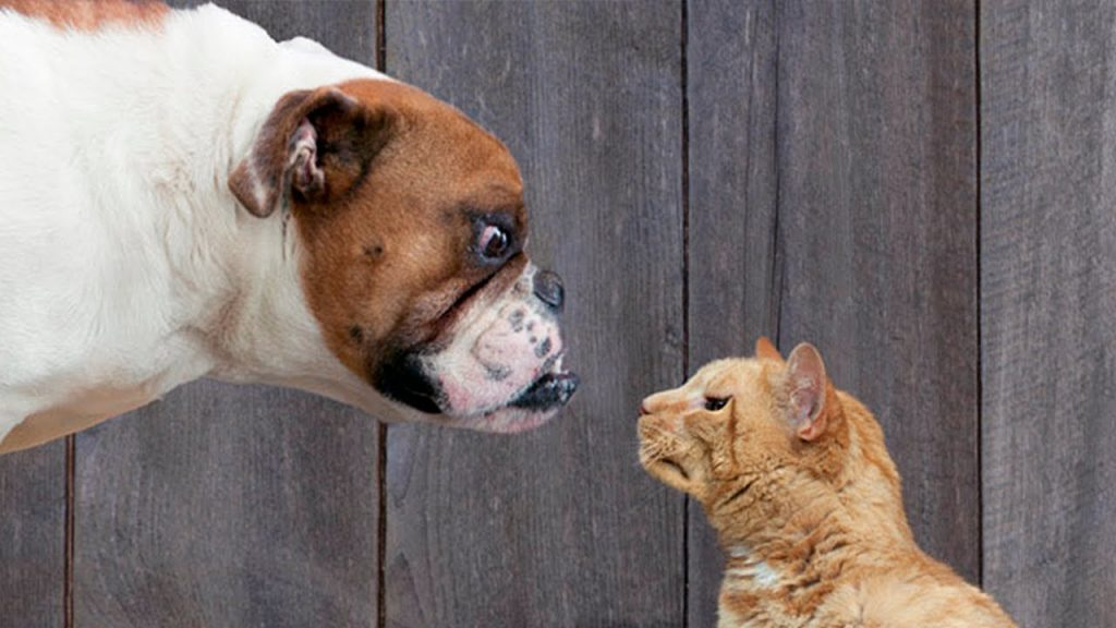 cats-vs-dogs-02