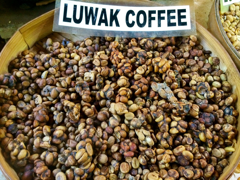 Kopi Luwak Coffee  The most expensive coffee in the world